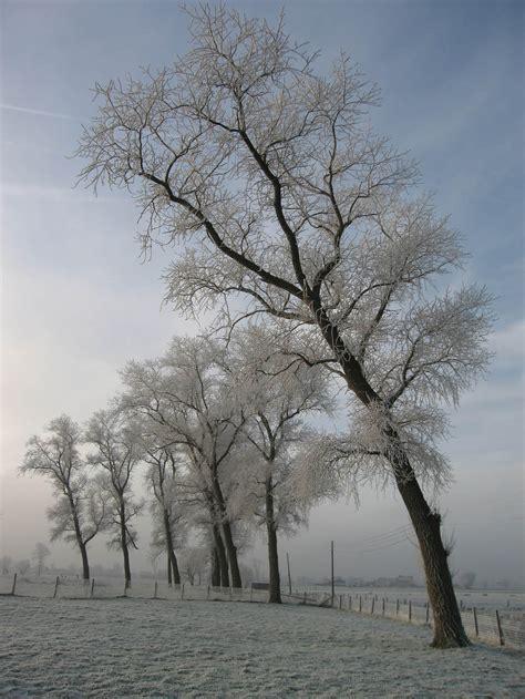 Foto winter. Gratis foto's om te printen - afb 9150.