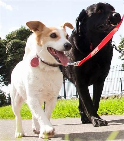 Dog Registration Nz Govt Ourauckland Reg Its