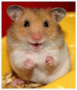 Cute Hamster ^_^v | Yosua Onesimus Sanctuary 6.0