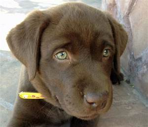 Dog Breeds With Green Eyes