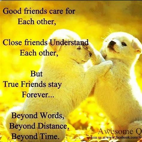 Good Animal Care Quotes