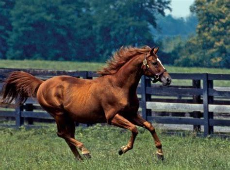 horse farms thoroughbreds fields rolling louisville kentucky ky horses field tripadvisor state