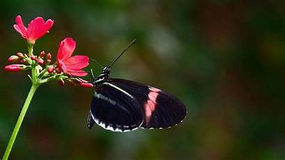 8k Ultra 4k Resolution Wallpapers Background Butterfly