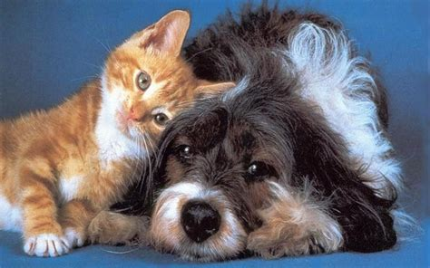 Cat And Dog So Sweet Pictures Of Cats And Dogs Funny Pictures Gallery