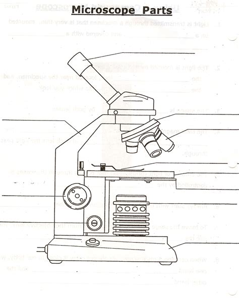 microscope parts and functions worksheet free worksheet