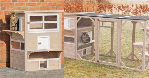 cat      luxury apartment