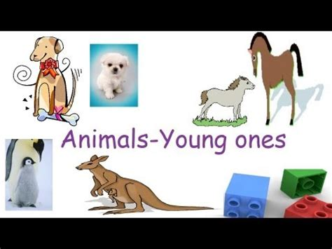 animals   young  animals   babies
