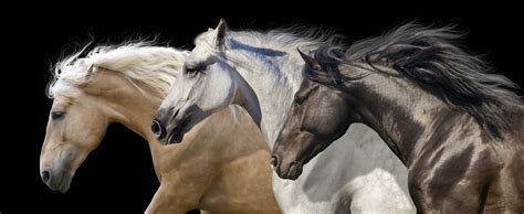 horse horses mustang palomino motion herd portrait facts run animal intelligent animals mane spirited forward young