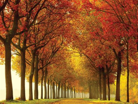 Top 10 The Most Beautiful Nature Scene Large Wall Murals