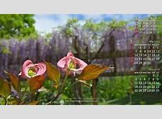 2018年5月の前月表示の3ヶ月ワイド壁紙カレンダー1600x900:ハナミズキ 無料ワイド高画質壁紙館
