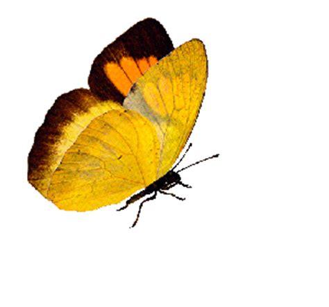 le canapé gif sur yvette de papillons animés pour vos créations