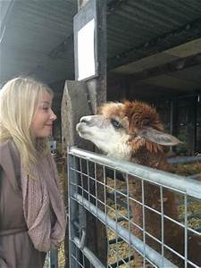 My sister and a donkey - Picture of Wigfield Farm ...