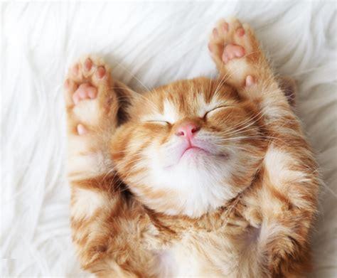 purrfect vacays  crazy cat ladies shesaid united
