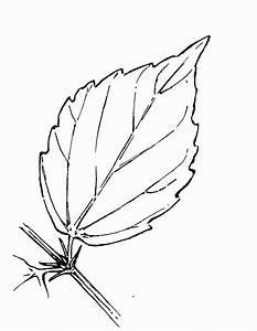 Simple Leaf Pattern - Coloring Home