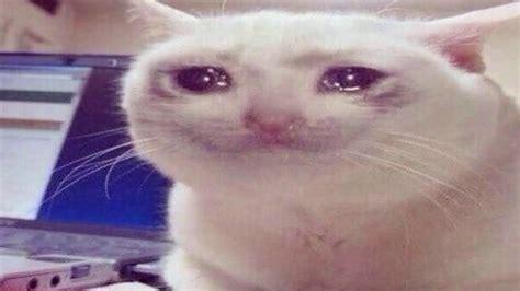 Crying Cat Meme - crying cat meme sadcats youtube