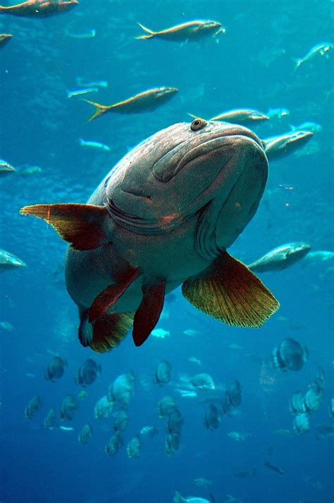 oldest catches florida fish grouper records state regional environment entertainment