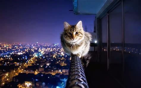 hd wallpaper  wallpaper kucing keren