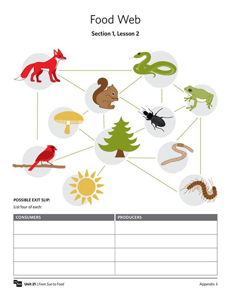 web cuisine quot food web quot worksheet fifthgrade science
