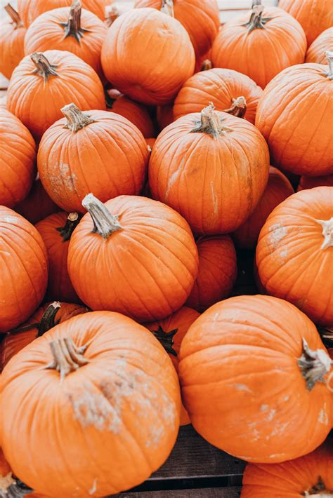 Colorado Pumpkin Patches 2017 by The 10 Best Fall Traditions 183 Haute Off The Rack