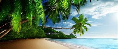 Tropical Ocean Palm Waves Coast Sand Wallpapers