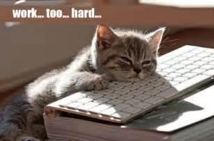 cat keyboard bank clerk dozes on keyboard accidentally transfers