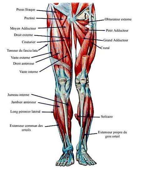 les 25 meilleures id 233 es de la cat 233 gorie jambe anatomie sur