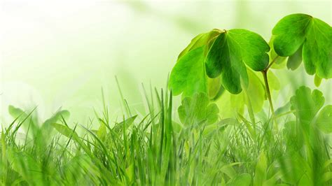 spring green wallpaper gallery
