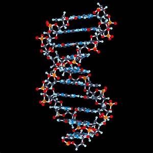 3d Dna Structure Pictures to Pin on Pinterest - PinsDaddy