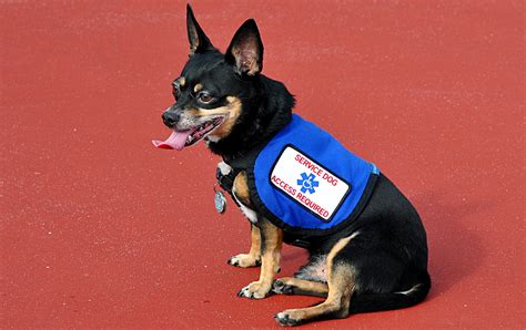 scammers  fake service dog ids  play  system