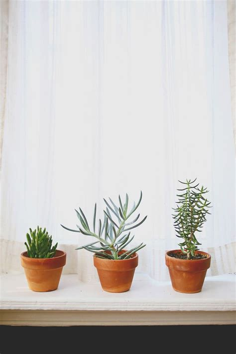 Best Indoor Window Plants 317 best windowsill plants images on