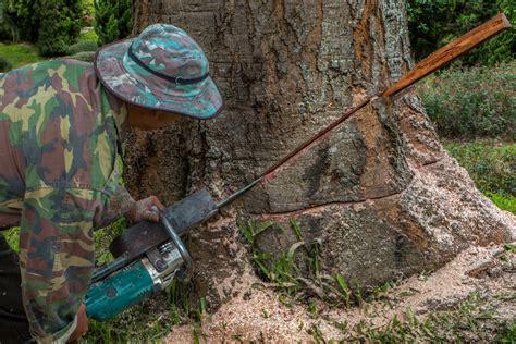 abattage arbre prix immobilier pour tous