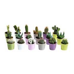 cactaceae potted plant with pot ikea