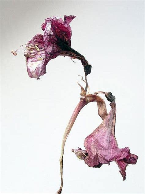 632 best flower on anatomical