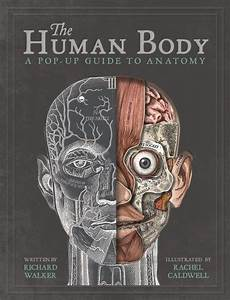 The Human Body  A Pop Up Guide To Anatomy