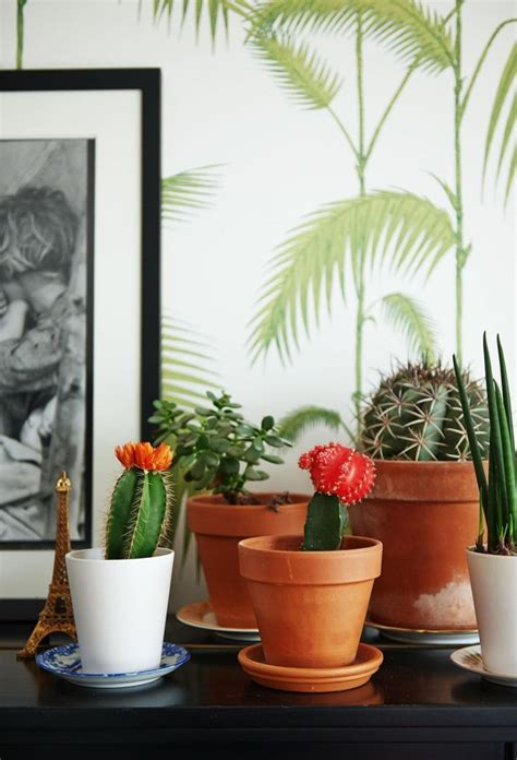 Bienfaits Du Cactus Dans Une Maison by Dans La Maison Y A Des Cactus Cocon D 233 Co Vie Nomade