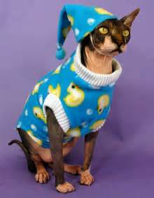 cat s pajamas top 10 images of cats in pajamas