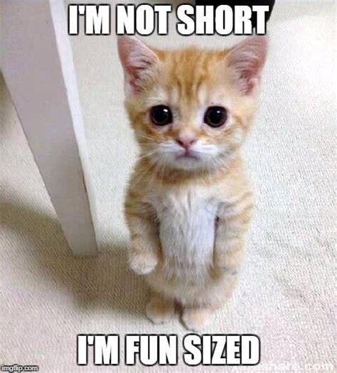 Cute Kitten Memes - cute cat memes imgflip