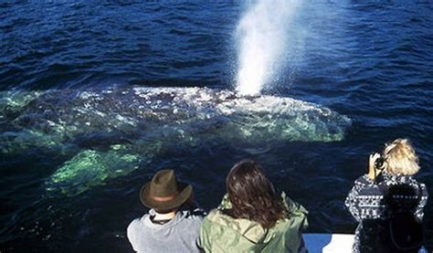 Boatsetter Los Angeles by Whale Island Tours Another1st Org