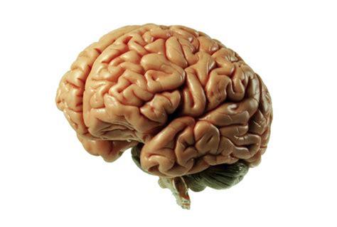 le si鑒e de nouvelle recherche le cerveau des obèses est moins efficace