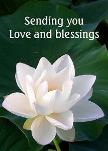 63 best Blessin... White Water Lily Quotes