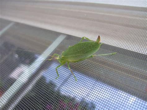 bugs    house diy