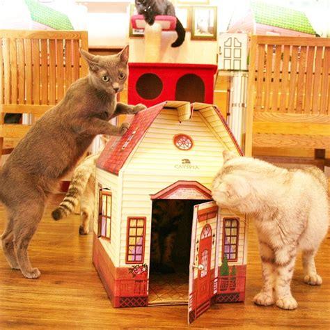 maison pour chat maison pour chat en cabane chat oh pacha