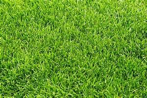 Trockene Stellen Im Rasen : erde f r rasen l cher im rasen hilfe was ist das f r ein tier rasen erneuerung wie welche ~ Markanthonyermac.com Haus und Dekorationen