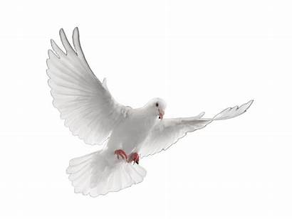 Funeral Doves Dove Transparent Dei Clipart Clip
