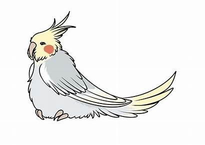 Transparent Clipart Roadrunner Bird Animated Finest Check