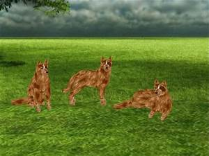Second Life Marketplace - Australian Cattle Dog - Red ...