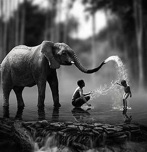 Elephant And Children Photography Pinterest Child