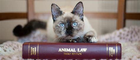 ghosts   machine interview   animal legal