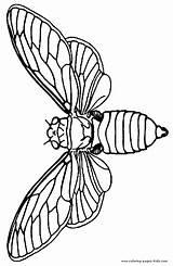 Moth Designlooter sketch template