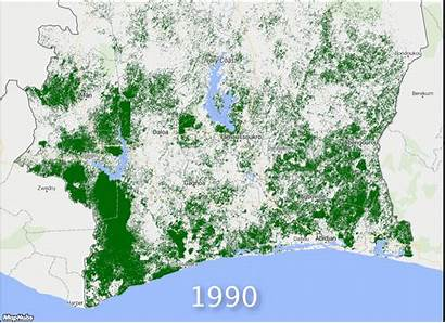 Deforestation Ivory Coast Map Cocoa Maps 1990